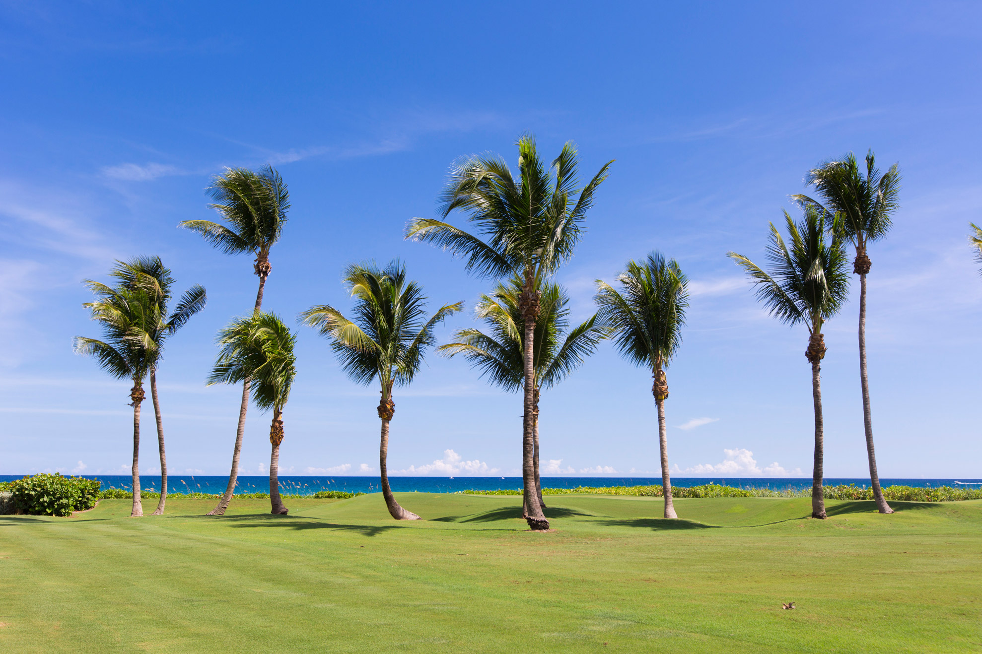 "Beautiful palm trees with the ocean in the background"" style="