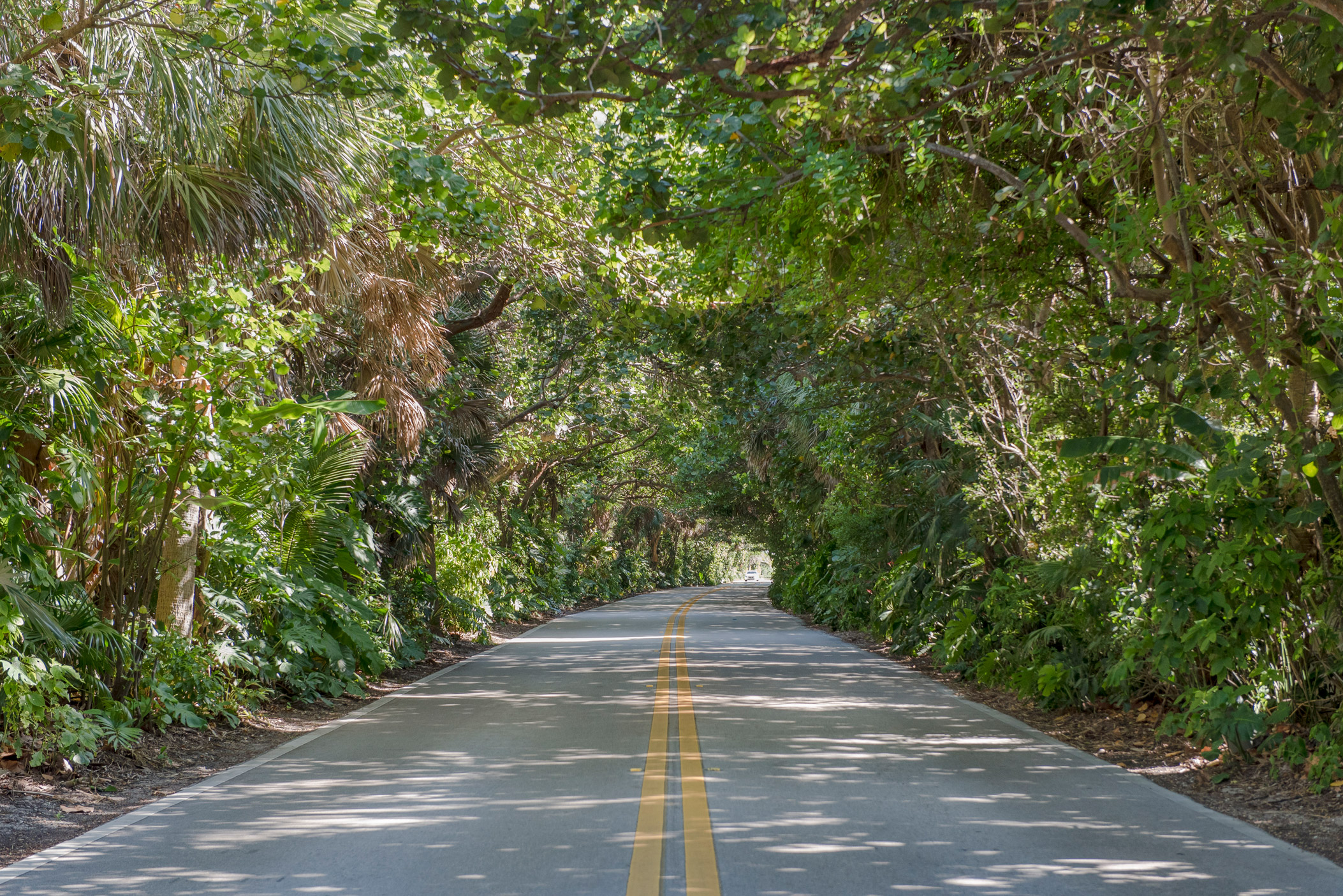 "A long road that is surrounded by greenery in Manalapan"" style="
